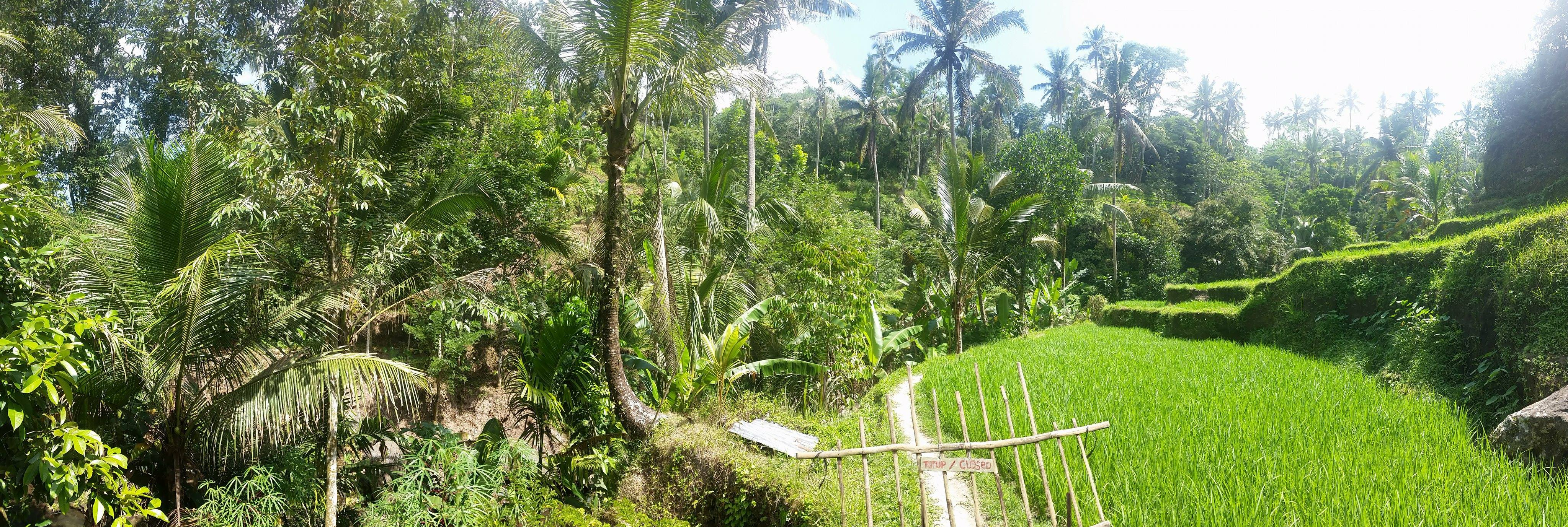 Pura Gunung Kawi Panorama